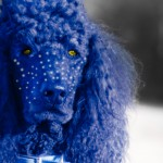 Crazy Avatar Blue Poodle