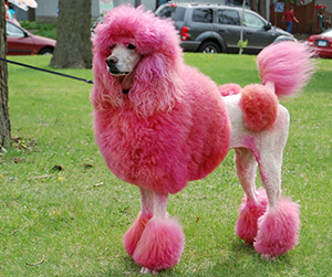 POODLE Vulnerability In SSLv3 Affects IBM WebSphere MQ
